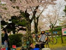 HAKONE JAPAN - JULI 02, 2017: Den oidentifierade kvinnan som spelar dragspelet i hanami, parkerar under säsong för körsbärsröd bl Royaltyfri Fotografi