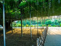 HAKONE JAPAN - JULI 02, 2017: Det härliga trädet med något blommar att falla från filialer på det fria i en parkera i Japan Royaltyfria Bilder