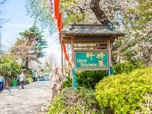 HAKONE JAPAN - JULI 02, 2017: Det oidentifierade folket som går i en parkera och tycker om sikten i hanami, parkerar under körsbä Royaltyfri Fotografi