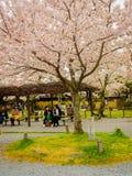 HAKONE JAPAN - JULI 02, 2017: Det oidentifierade folket som går och tycker om i hanami, parkerar under säsong för körsbärsröd blo Royaltyfri Bild