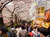 HAKONE JAPAN - JULI 02, 2017: Det oidentifierade folket som går och tycker om i hanami, parkerar under säsong för körsbärsröd blo Royaltyfria Bilder