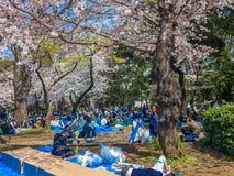 HAKONE JAPAN - JULI 02, 2017: Det oidentifierade folket som sitter i en parkera och tycker om sikten i hanami, parkerar under kör Royaltyfria Bilder
