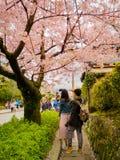 HAKONE JAPAN - JULI 02, 2017: Det oidentifierade folket som tar bilder och tycker om i hanami, parkerar under den körsbärsröda bl Royaltyfria Foton