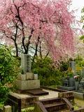 HAKONE JAPAN - JULI 02, 2017: Higashiyama område med körsbärsröda blomningar på vårtiden i Kyoto Royaltyfria Foton