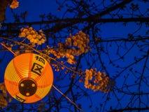 HAKONE JAPAN - JULI 02, 2017: Japanesse bokstäver i en gul lykta på natten i körsbärsröda blomningar i majestätiska Sakura Royaltyfria Bilder