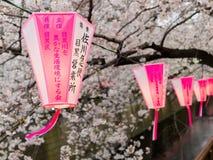 HAKONE JAPAN - JULI 02, 2017: Japanesse bokstäver i rosa och vita lyktor med körsbärsröda blomningar för en härlig sikt Fotografering för Bildbyråer