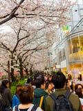 HAKONE JAPAN - JULI 02, 2017: Oidentifierat folk som går och tycker om den sceniska sikten av härliga körsbärsröda blomningar Royaltyfria Bilder