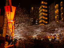 HAKONE JAPAN - JULI 02, 2017: Oidentifierat folk som tycker om de körsbärsröda blomningarna på natten i det Higashiyama området m Royaltyfri Fotografi