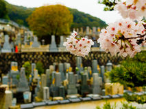 HAKONE, JAPAN - JULI 02, 2017: Sluit omhoog van een kers tot bloei komt in Higashiyama-district met de lente in Kyoto in a Stock Afbeeldingen