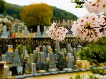 HAKONE JAPAN - JULI 02, 2017: Stäng upp av körsbärsröda blomningar i det Higashiyama området med våren i Kyoto i ett a Arkivbilder