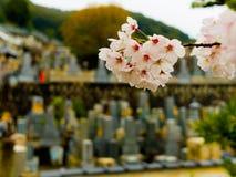 HAKONE JAPAN - JULI 02, 2017: Stäng upp av körsbärsröda blomningar i det Higashiyama området med våren i Kyoto i ett a Arkivfoton
