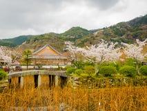 HAKONE JAPONIA, LIPIEC, - 02, 2017: Niezidentyfikowani ludzie chodzi pięknego widok czereśniowi okwitnięcia w Sakura i cieszy się Zdjęcie Royalty Free