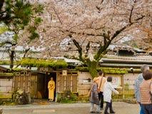 HAKONE JAPONIA, LIPIEC, - 02, 2017: Niezidentyfikowani ludzie chodzi podczas czereśniowego okwitnięcia sezonu wewnątrz i cieszy s Zdjęcia Royalty Free