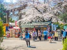 HAKONE JAPONIA, LIPIEC, - 02, 2017: Niezidentyfikowani ludzie chodzi w parku i cieszy się widok w han parku podczas wiśni Fotografia Royalty Free