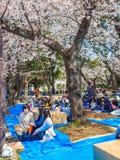 HAKONE JAPONIA, LIPIEC, - 02, 2017: Niezidentyfikowani ludzie siedzi w parku i cieszy się widok w han parku podczas wiśni Obrazy Royalty Free