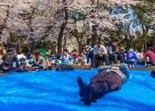 HAKONE JAPONIA, LIPIEC, - 02, 2017: Niezidentyfikowani ludzie w parku i cieszyć się widok w han parku podczas czereśniowego okwit Zdjęcia Royalty Free