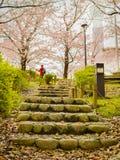 HAKONE JAPONIA, LIPIEC, - 02, 2017: Niezidentyfikowany mężczyzna chodzi widok w han parku i cieszy się podczas czereśniowego okwi Fotografia Royalty Free