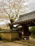 HAKONE JAPONIA, LIPIEC, - 02, 2017: Sceniczny widok piękni czereśniowi okwitnięcia w Sakura majestatyczny Kiyomizu-dera, sławny Fotografia Royalty Free
