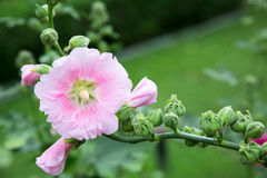Halète la fleur d'arbre Photo stock