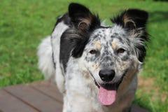 Halètement d'outisde de chien photo stock