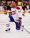 Hal Gill Montreal Canadiens Royaltyfri Bild