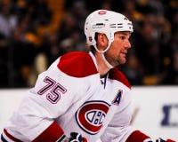 Hal Gill Montreal Canadiens Arkivfoto