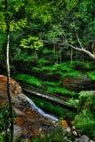 Hal träbro längs vattenflumen i en liten klyfta HDR Royaltyfria Foton