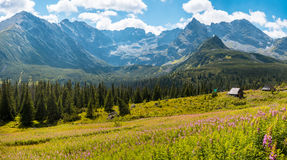 Hala Gasienicowa, Tatra mountains Zakopane Poland. Summer view to Hala Gasienicowa in valley, Tatra mountains Zakopane Poland Stock Image
