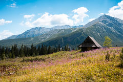 Hala Gasienicowa, Tatra mountains Zakopane Poland. Summer view to Hala Gasienicowa in valley, Tatra mountains Zakopane Poland Royalty Free Stock Photos