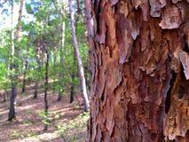 Halb-abgeschirmter Wald lizenzfreie stockbilder