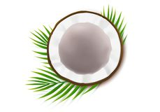 Halbe Coconuß mit grünen Palmblättern stockfotografie