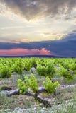 Halbe Sonne und halbe Weinberge im Hochformat Stockfoto