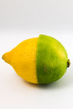Halber Kalk der halben Zitrone der Zitrusfrucht stockbild