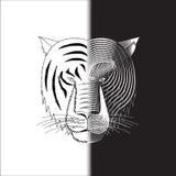 Halbes Gesicht des Tigers Stockfoto