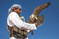 Halcón masculino del saker durante una demostración del vuelo de la cetrería en Dubai, UAE fotografía de archivo