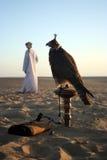 Halcón árabe Imagenes de archivo