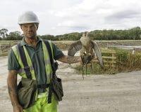 Halconero con los pájaros de trabajo Fotos de archivo