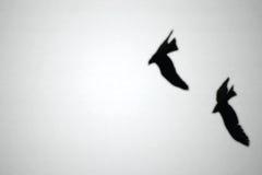 Halcones en el cielo Imagen de archivo libre de regalías