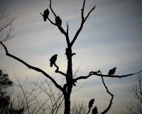Halcones en un árbol muerto Imagen de archivo libre de regalías