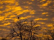 Halcones que miran el amanecer Foto de archivo