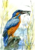 The halcyon holds a small fish in a beak kingfisher. On the lake vector illustration