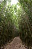 Haleakala bambu Arkivbilder