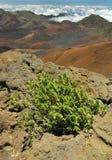 Haleakala Crater, Maui Royalty Free Stock Photography