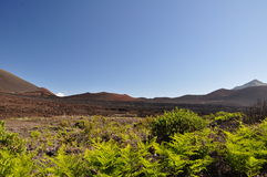 Haleakala Crater with plants - Maui Royalty Free Stock Photography