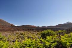 Haleakala Krater mit Anlagen - Maui lizenzfreie stockfotografie