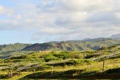 Haleakala Park Stock Images