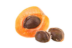 Half of apricot with core Stock Images