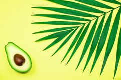 Avocado and palm leaf on yellow background. stock photography