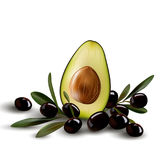 Half an avocado with olive branches. Royalty Free Stock Photos