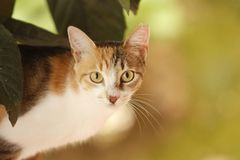 Stray tricolor cat with short fur and a stares at the observer. stock photos